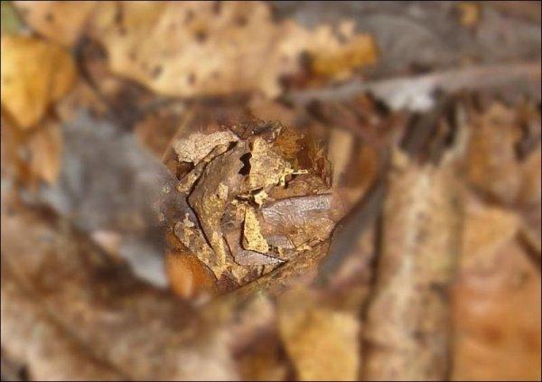 Игра-искалка - найди лягушку