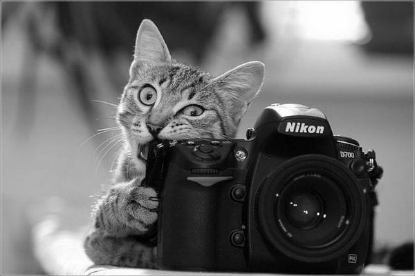 Фотоподборочка, 100 фоточек