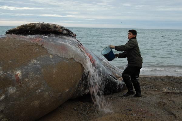 видео про ловлю китов