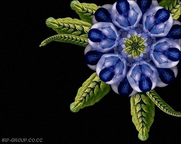 Интересные цветы 174