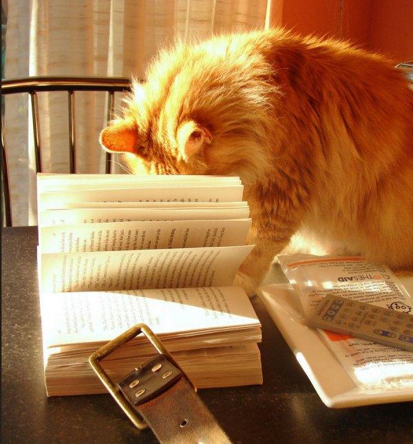 Читающие кошки