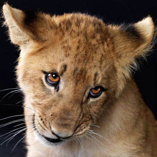 Великолепные фотографии животных