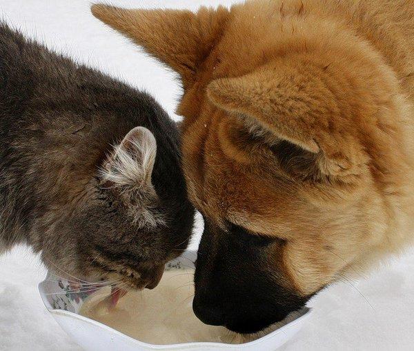 接触动物的友谊图片