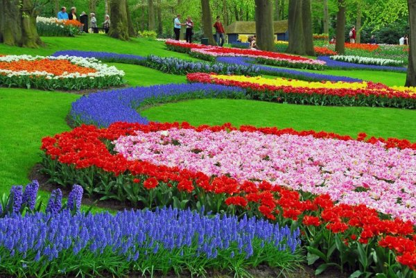 Весеннее море цветов