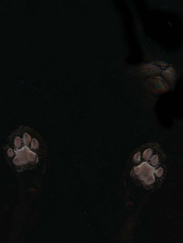 可爱猫爪背景贴图