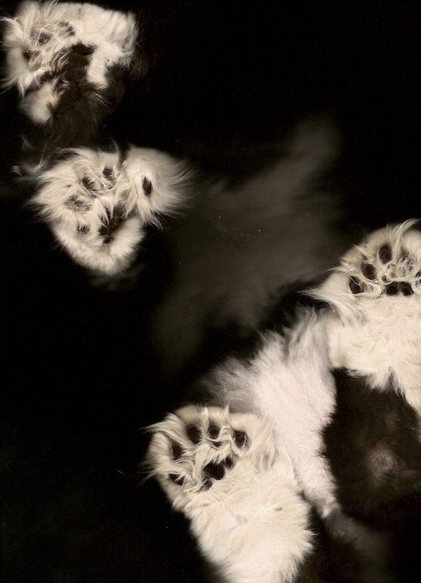 复印机下的猫爪印