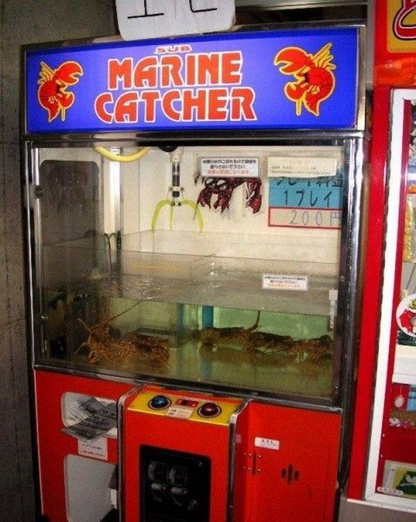 автомат игрушки ловить
