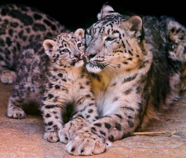 Мамы и детеныши