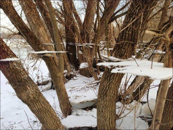 Деревья после наводнения