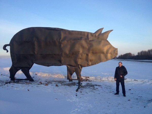 Свинья под Свердловском