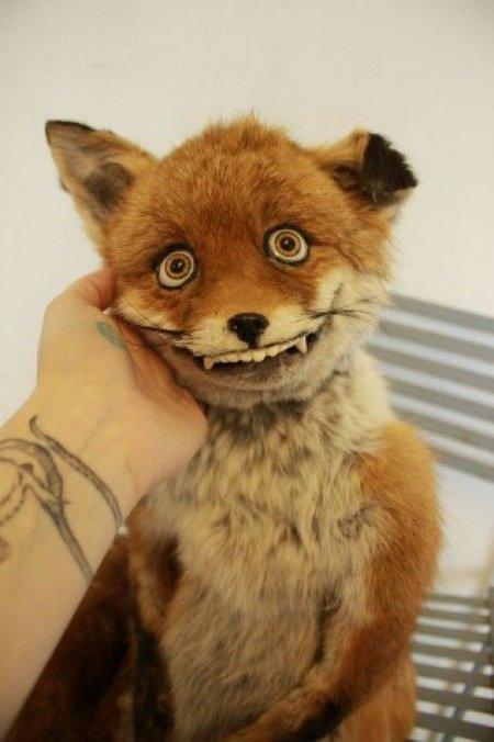 Смешные лисы
