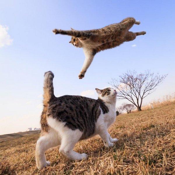 Скачать Игру Боевые Коты - фото 11