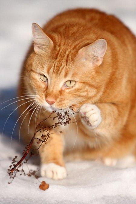 Шикарная мимика кота)))))))))