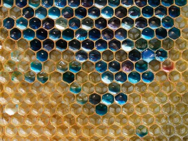 Синий мед