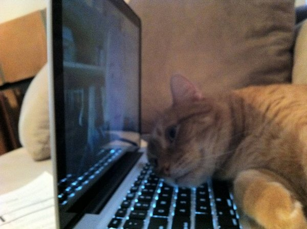 http://www.doodoo.ru/uploads/posts/2013-11/cats-and-people-03.jpg