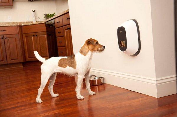 Видеотелефон для собак