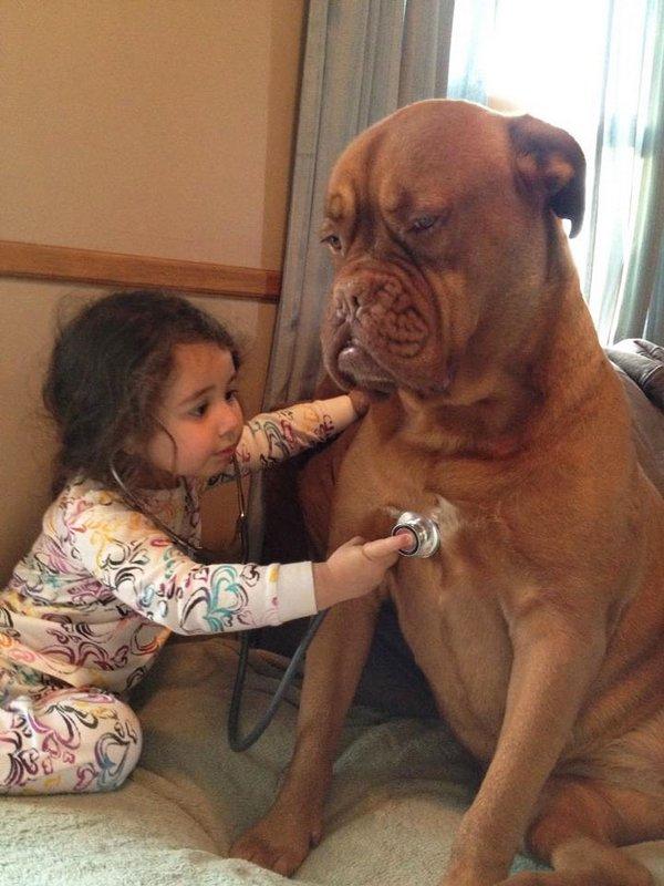 Большие собаки и дети