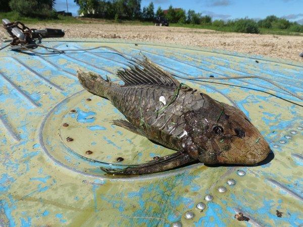 Рыба с головой черепахи