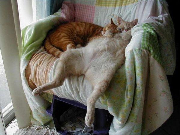 Сплю как хочу