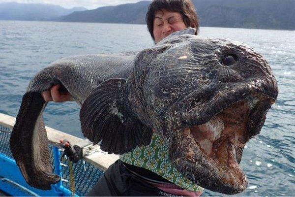 Рыба из Фукусимы