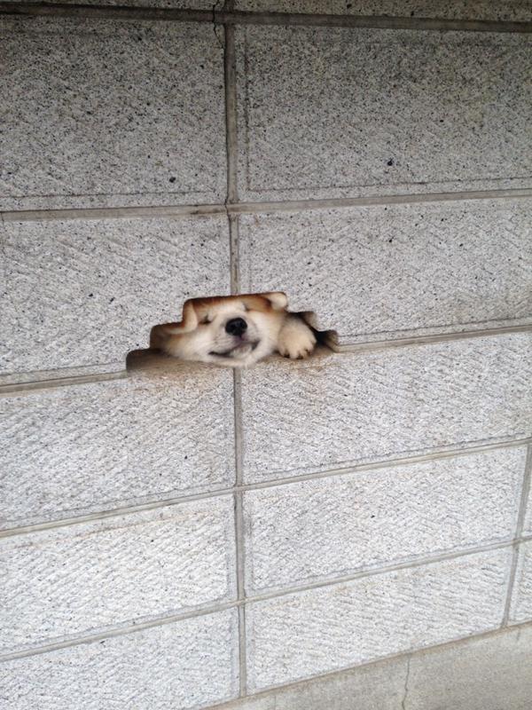 Щенок в стене