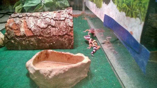 Рождение геккона