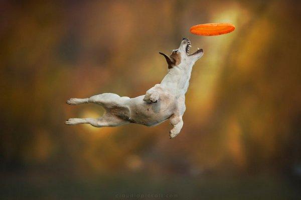 Собаки умеют летать