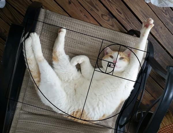 Коты - само совершенство!