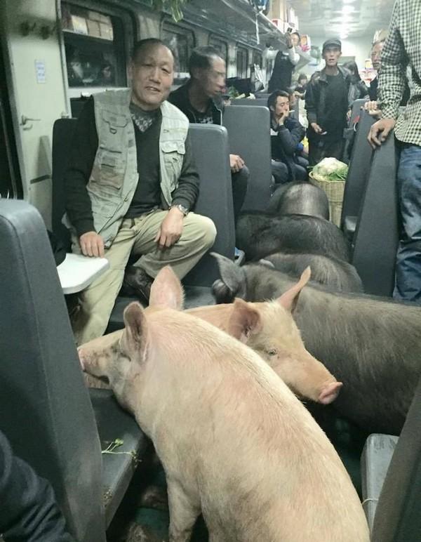 Свинья в электричке