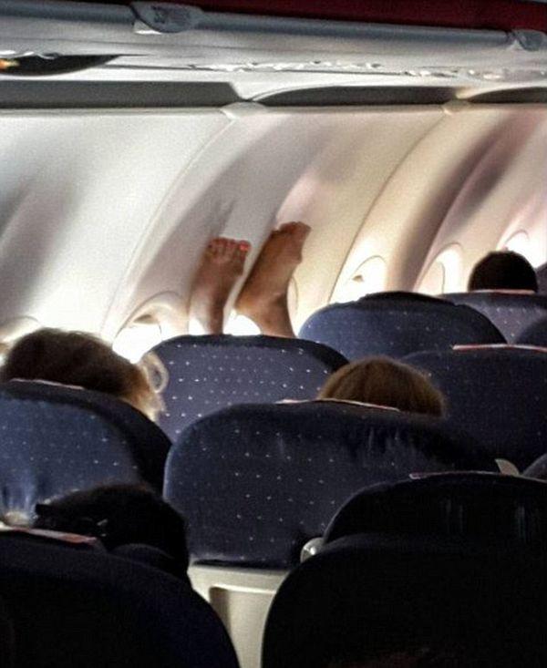 Свиньи в самолете