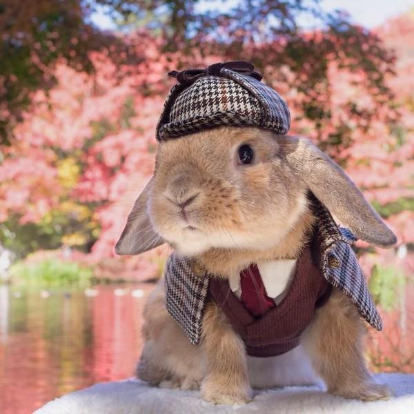 Стильный кролик