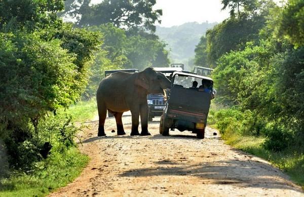 Голодный слон