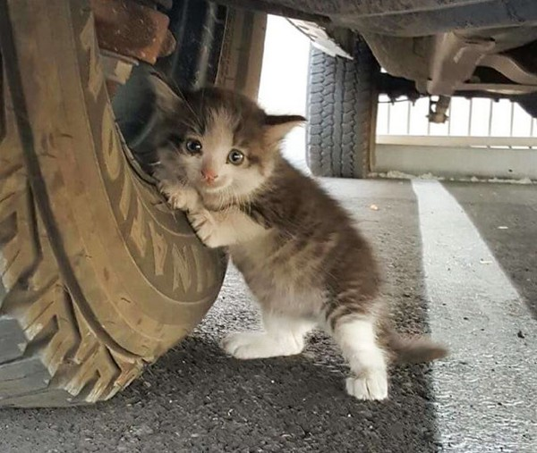 Котенку повзло