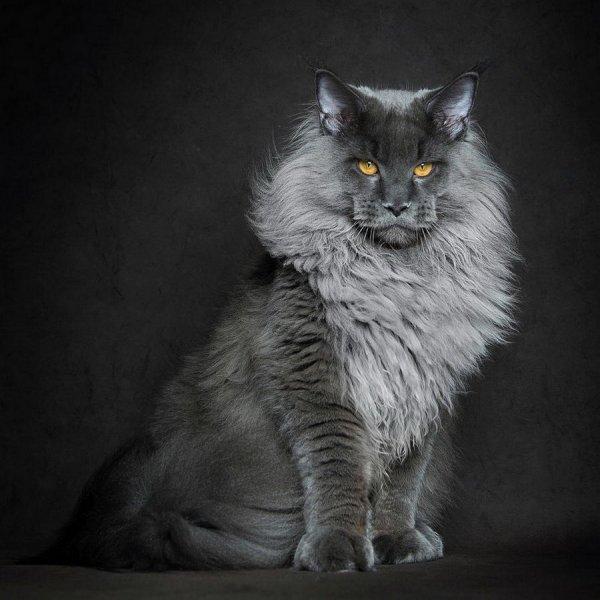 Фото зверей