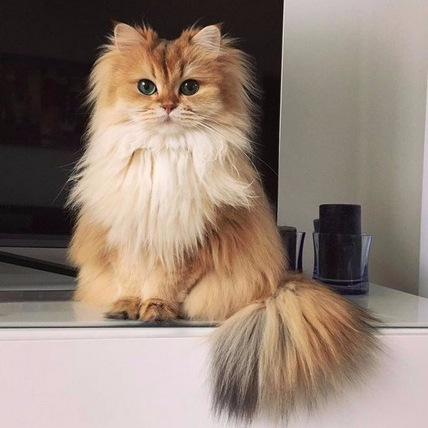 Фотогеничная кошка