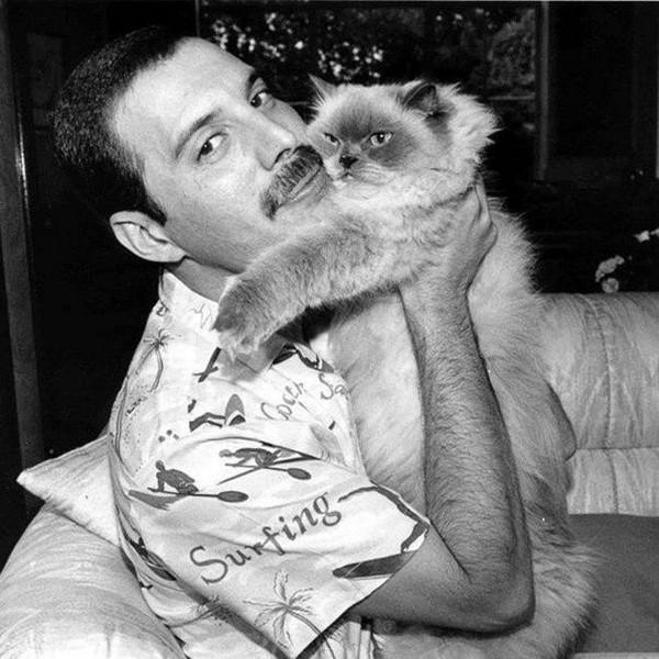 Коты и знаменитости