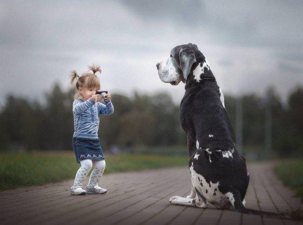Кошки, собаки и другие