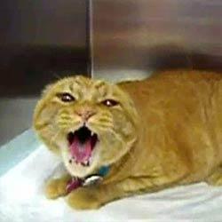 Кошка в клетке - Видеоприколы