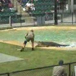 Steve Irwin : Шоу с крокодилами