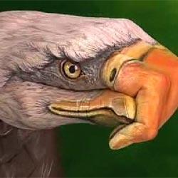 Рука-орел : Прикольные рисунки на руке