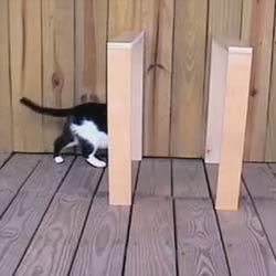 Телепорт для кошки - Видеоприколы