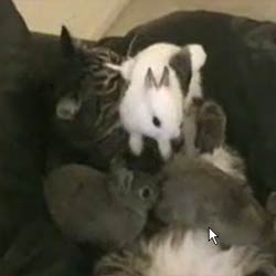 Кошка и крольчата